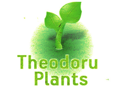 Noodles Theodorou - Nurseries Modi Asprovalta Lagkadas Thessaloniki - Tree Plant Nurseries Thessaloniki - Ornamental Plants - Shrubs Trees - Aromatic Plants - Garden Construction
