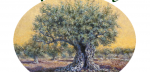 TRADE AND PROCESSING OF OLIVE PELASGIA FTHIOTIDA - OLIVES PELASGIA - CHRISTOPHER ANDRITSOS - PACKAGING - OLIVE STANDARDIZATION