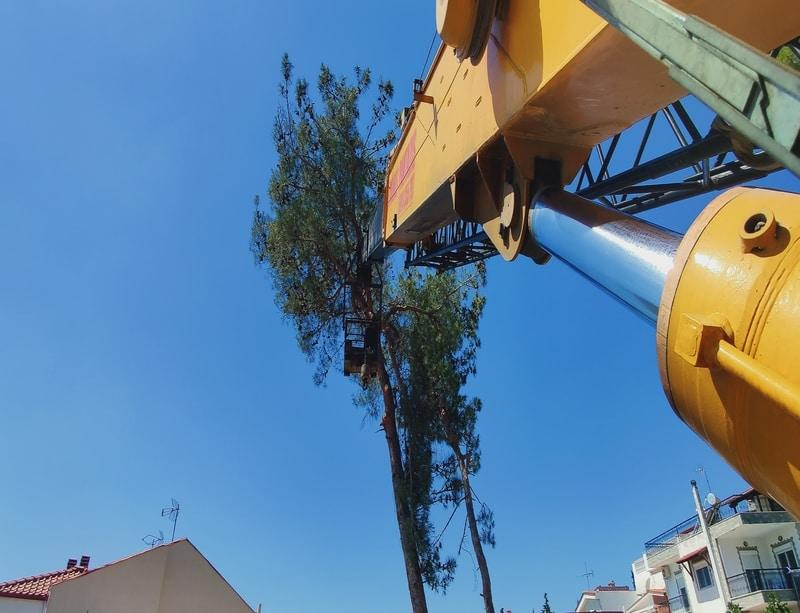 tree cutting Macedonia Halkidiki Thessaloniki